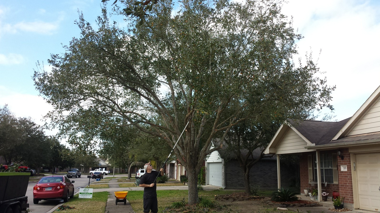 trees trimmed in League City TX