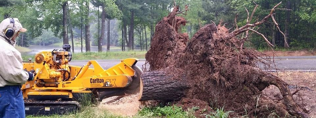 stump grinding example in League City TX