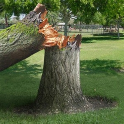 Tree Removal In Webster TX