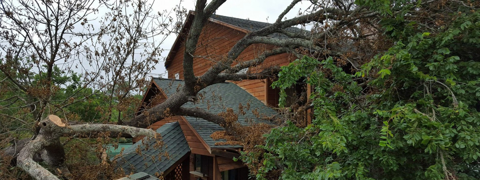 tree service and tree removal pros in League City TX