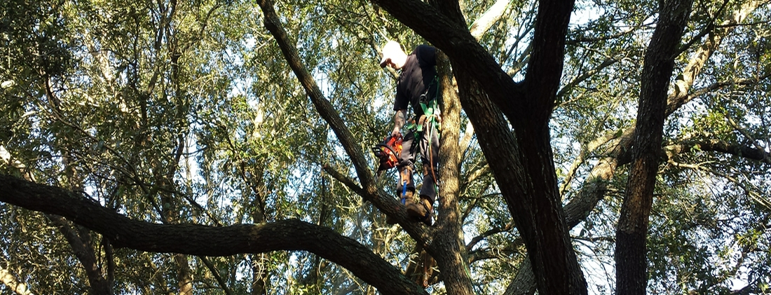 tree service and tree removal pros in Texas City TX