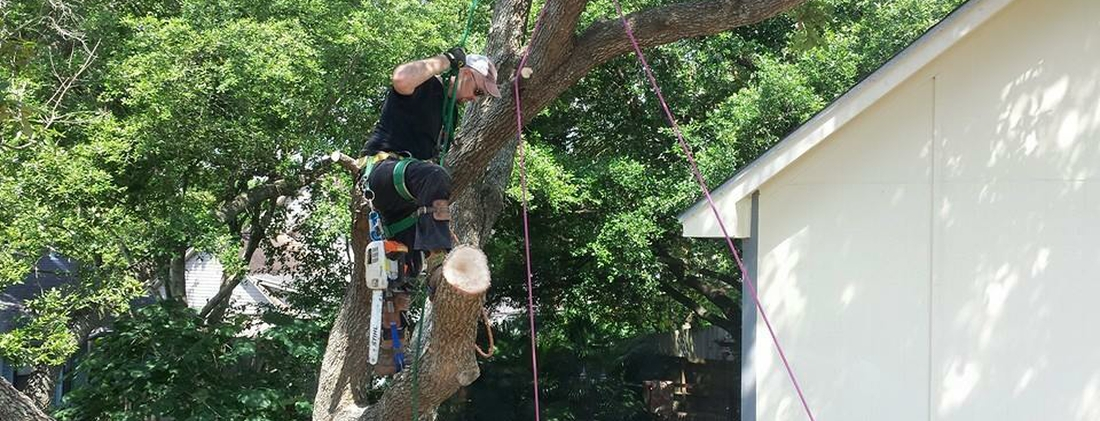 tree service and tree removal pros in Webster TX