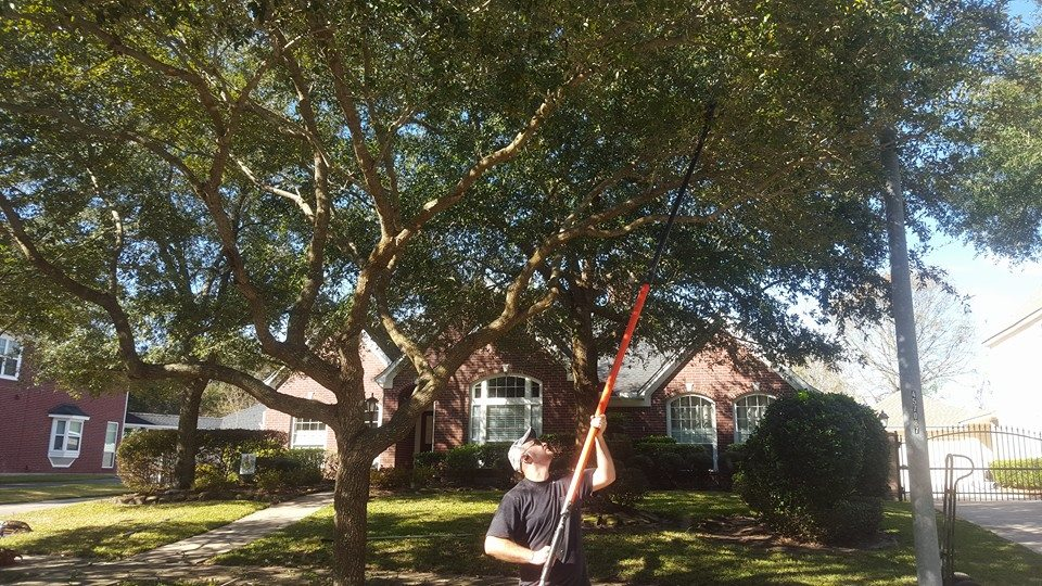 Tree Trimming Service In League City Texas