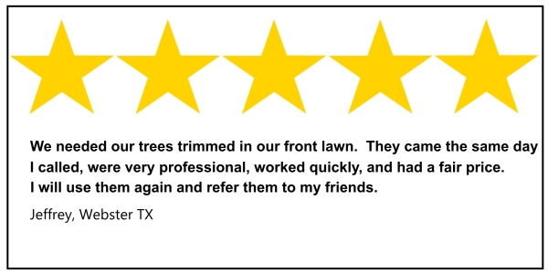 Webster tree service 5 star review